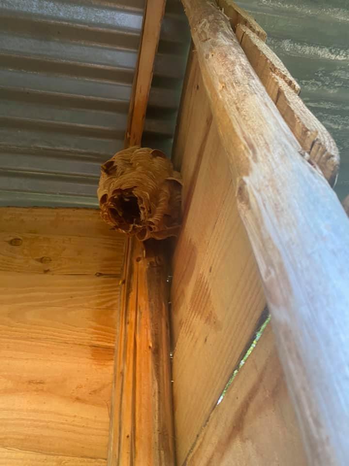 Photo d'un nid de guêpe détruit lors de la saison 2020
